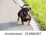 Stock photo  beautiful dog with leather leash 321880307