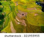 beautiful terraced rice field... | Shutterstock . vector #321955955