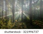 Sun Burst In Forest