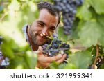 winemaker in vineyard picking... | Shutterstock . vector #321999341