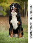 bernese mountain dog | Shutterstock . vector #322200887