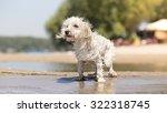 Wet Dog On The Beach Shaking O...