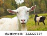 funny goat                      ... | Shutterstock . vector #322323839