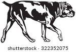 cane corso dog walk  dog breed...   Shutterstock .eps vector #322352075