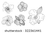 hand drawn orchid flower ... | Shutterstock .eps vector #322361441