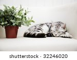 Stock photo sleeping cat 32246020