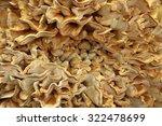 Laetiporus Sulphureus  Sulfur...