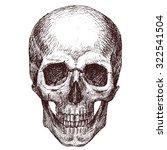 Pen Drawing Human Skull  Human...