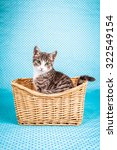 Stock photo charming kitten tidy in basket 322549154