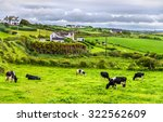 Herd Of Cows In Pasture In...