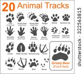 Animals Tracks On White...
