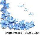 Blue hydrangea border on white background.  Macro of tiny petals with copy space included. - stock photo