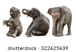 cute baby asian elephant in... | Shutterstock . vector #322625639