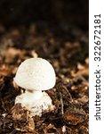 Small photo of mushroom- Amanita Phalloides V.Verna macro photo