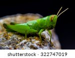 green grasshopper on stone back ... | Shutterstock . vector #322747019