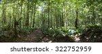 panorama of deep green jungle... | Shutterstock . vector #322752959