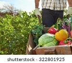 Farmer Harvesting Organic...