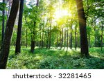 Summer Forest  Sun