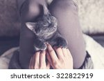 Stock photo sweet kitten taking a nap 322822919