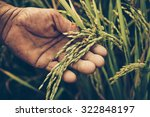 Agriculture  Old Hand Tenderly...