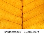 Close Up On Yellow Leaf