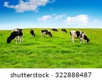 cows on a green field. | Shutterstock . vector #322888487