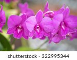 bright purple wild orchid... | Shutterstock . vector #322995344