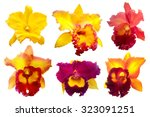 Colorful Orchid Isolated On...