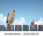 big and small birds sitting on... | Shutterstock . vector #323110214