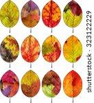 A Set Of Colorful Autumn Leave...