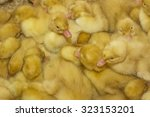 group of small yellow ducklings ... | Shutterstock . vector #323153201