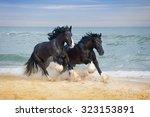 Two Beautiful Big Horses Breed...