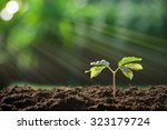 young plant in the morning... | Shutterstock . vector #323179724
