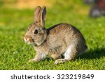 Jack Rabbit Hare While Looking...