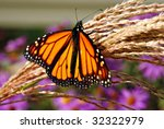 Beautiful Monarch butterfly on ornamental grass with purple flowers in background.  Close-up with extremely shallow dof. - stock photo