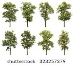 collection of tree isolated on... | Shutterstock . vector #323257379