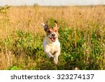 Stock photo cute dog running freely at field 323274137