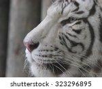 white tiger | Shutterstock . vector #323296895