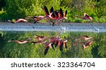 caribbean flamingos flying over ... | Shutterstock . vector #323364704