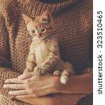 Cute Ginger Kitten Sitting On...