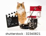 Calico Cat With Director Chair...