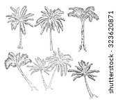 vector set of sketch palm trees | Shutterstock .eps vector #323620871