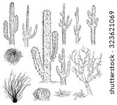 Vector Set Of Sketch Cactuses...