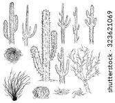 Vector Set Of Sketch Cactuses...