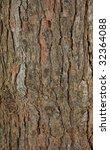Pinetree Bark Texture