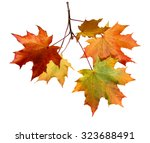 autumn leaves isolated on white ... | Shutterstock . vector #323688491