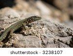 small lizard sunbathing on a... | Shutterstock . vector #3238107