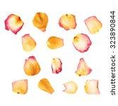 pink dried rose flower petals...   Shutterstock . vector #323890844
