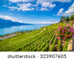 beautiful scenery with rows of...   Shutterstock . vector #323907605