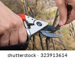 hand with pruning shears | Shutterstock . vector #323913614